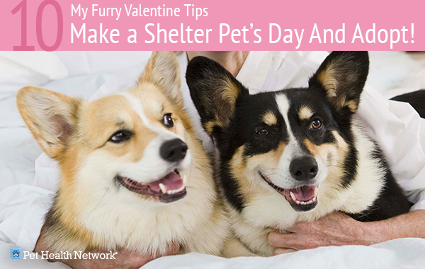 Valentine S Day With Pets 12 Ways To Show Your Pet Some Love