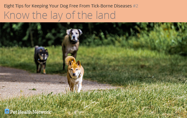 Cães correndo lá fora