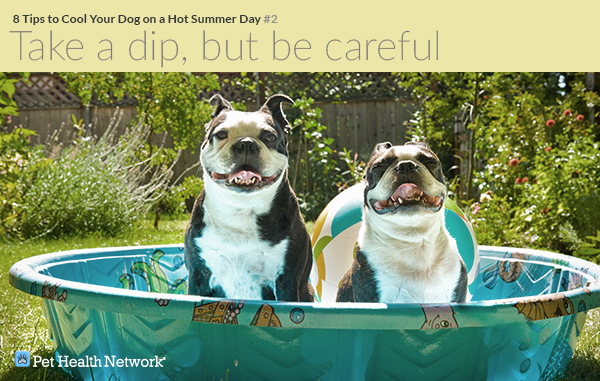 8 Tips to Cool Your Dog on a Hot Summer Day