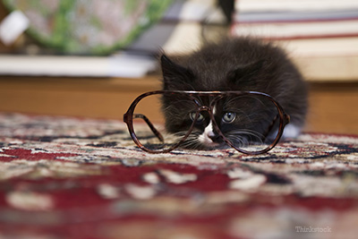 Kitten looking through a pair of glasses
