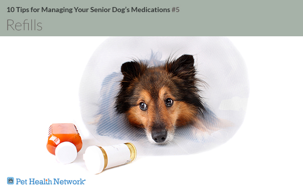 Dog with cone next to pills