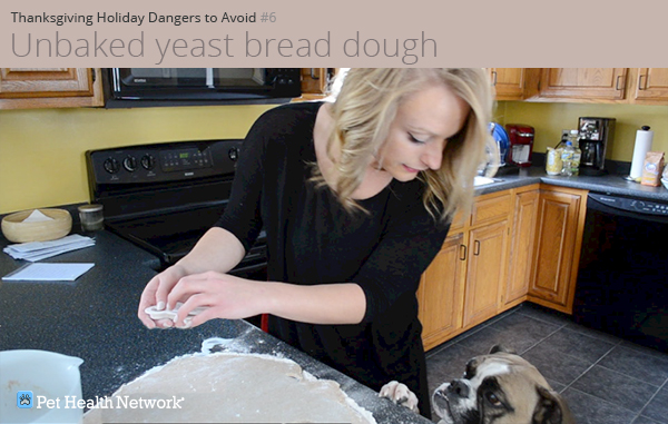 Dog on counter by bread dough