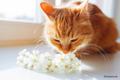 cat sniffing flowers might sneeze
