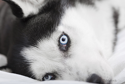 Are Dogs Really Color Blind