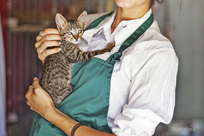 Volunteer holding a shelter cat