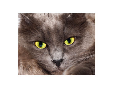 grey cat names from movies