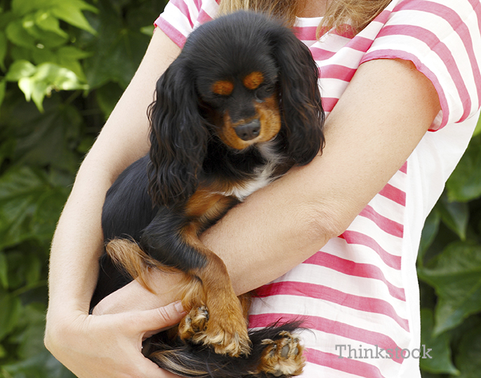 Lady hugging her King Charles Spaniel
