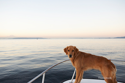 Hero dog on her boat