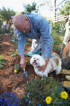 Guy gardening with his dog