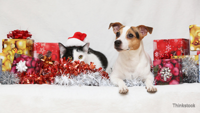 dog and cat enjoying holiday gifts