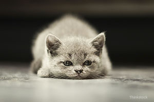 Sad cat laying on floor
