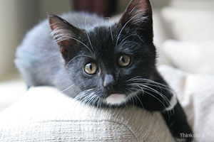 Black kitten on couch