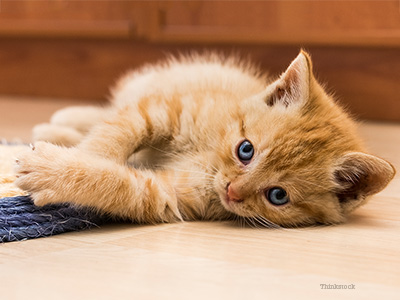 Kitten on floor