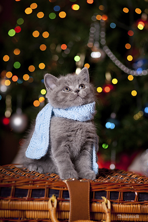 Kitten with a scarf