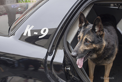 Police dog stepping out of a cruiser