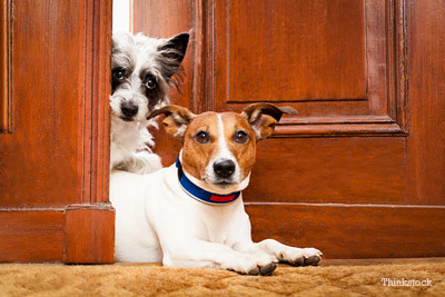 2 Dogs at Door