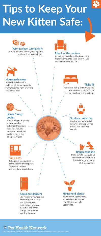 tips to keep your new kitten safe. Black Bedroom Furniture Sets. Home Design Ideas