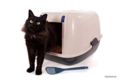 cat pooping in litter box