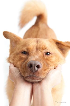 What Should Dog Poop Look Like
