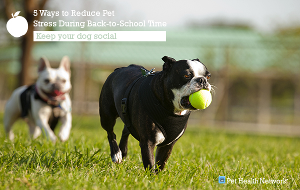 5 Ways to Reduce Pet Stress During Back-to-School Time