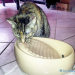 Checkoutthiscatfountain!