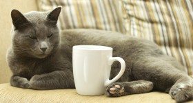 Would You Like a Cat with That Coffee?
