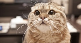 """5 """"Silent"""" Killers of Cats"""