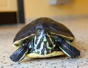 Turtle at the vet
