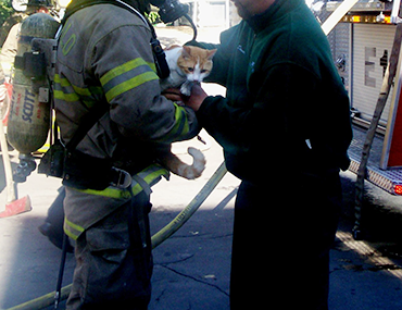 Fire fighters rescuing a cat