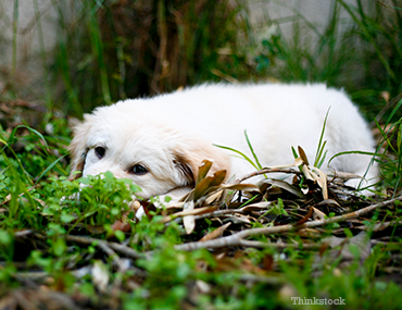 Dog lying in grass