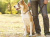 A Veterinarian's Top 5 New Year's Resolution Recommendations!