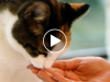 Watch These Cats Learning Sign Language