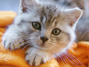 10 Assumptions That May Hurt Your Cat