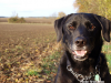 pet health tips for fall