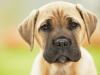 Can My Dog Get Diseases or Parasites from Mosquitoes?