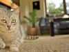 Why Do Cats Run from the Litter Box After Pooping?