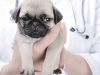 Your New Puppy Checkup