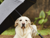 4 Rainy Season Dangers You Might Not See Coming