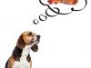 Thanksgiving pet dangers