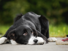 Why Do Pooches Eat Poop?