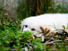 Your Dog and the Dangers of Lyme Disease: Part II
