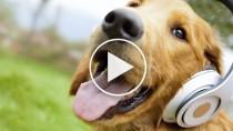 5 Fun Pet Music Videos