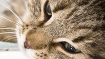 A New Study Shows that Vomiting in Cats is often a Sign of Serious Disease