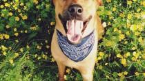 Best Dog Smiles