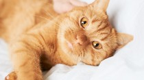 Orange cat on a bed