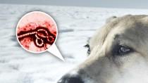 Ebola-Stricken Medical Worker's Dog at Risk of Euthanasia