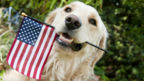 Fireworks Safety and the 4th of July