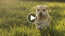 Five Adorable Dog Videos to Make You Ache for Spring