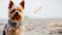 Could Genetic Testing Help Eliminate Debilitating Dog and Human Diseases?