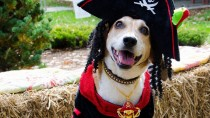 Pets Celebrate Halloween